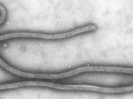 cropped-Ebola.jpg